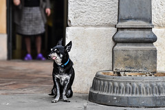 funny (eleonoramasneri) Tags: world life street portrait italy dog beauty smile animal cheese wonderful pose see photo amazing funny view place sweet lol live breathe capture brescia rovato keepcalm