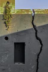 DSC_0906-EditFAA (john.cote58) Tags: sanfrancisco california shadow plants abstract texture wall contrast design succulent earthquake artist graphic cement exhibition crack marinheadlands