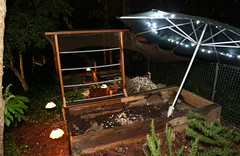IMG_7777 (jalexartis) Tags: lighting nightphotography sun night dark outdoors aquarium outdoor aquatic basking aquatichabitat ybst yellowbelliedsliderturtles outdoorhabitat