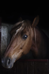 Inquieto (Giulia Orsatti) Tags: horse pet pets eye nature animal animals eyes pony pre soul conceptual anima cavallo occhio