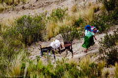 Going home (rod_b_k) Tags: people woman baby southamerica la countryside highlands mother donkey paz bolivia lapaz peasant 500px ifttt