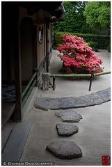 Kirishima tsutsuji blooming in Shisendo temple, Kyoto (Damien Douxchamps) Tags: japan temple kyoto rhododendron    kansai japon   kinki kirishima tsutsuji shisendo     shisendou  jozanji jouzanji   northernsakyo