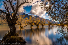 Glenorchy Trees HDR- (picturesbysteve) Tags: trees newzealand nz queenstown tamron willows hdr 6d 1024 glenorchy 24105 canon6d stephenhumpleby newzealand2016