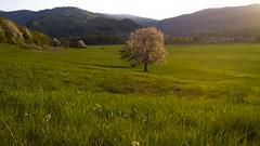 Morning (Tamoadamo1) Tags: morning sunshine sunrise landscape cherryblossom slovakia svk