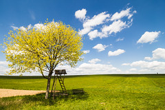 One for the spring (stefan.el77) Tags: blue sky white tree green yellow clouds bench freedom spring shadows horizon meadow bluesky fresh dreaming highseat elevating cottonwhoolclouds