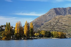 Lakeside, Queenstown (matt bidgood) Tags: lake poplar otago queenstown wakatipu