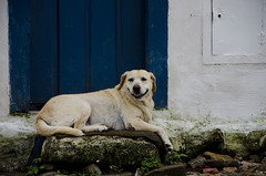 Centro Histrico Paraty - RJ (Vinicius Pertile) Tags: rio paraty de real rj janeiro centro estrada cachorro sorrindo histrico historico