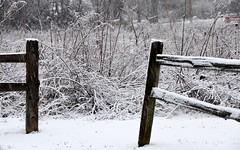 Open Door Policy (Theresa*) Tags: winter white cold fence nikond7000 2ndsnowfalloftheseason only2snowfallssofar
