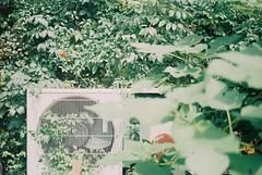 The littlest noon. (Castorie) Tags: camera wood city light cidade summer tree verde green film grass japan analog forest canon garden japanese leaf nikon afternoon fuji minolta pentax cloudy kodak secret ishootfilm vietnam jardim fujifilm analogue filme hanoi albero grainisgood floresta rvore fujica praktica tender tarde drizzly drizzle helios indochina nikomat tardy filmphotography drizzling 50d hni filmisnotdead tra istillshootfilm filmisalive filmisbetter