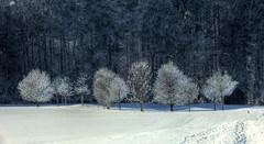 Trees (Claude@Munich) Tags: schnee trees winter snow germany bayern bavaria hoarfrost oberbayern upperbavaria explore bume raureif reif winterlich claudemunich egling badtlzwolfratshausen ergertshausen explore91160125