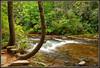 Dupont State Park (Jerry Jaynes) Tags: park trees river nc rocks northcarolina dupontstatepark nikkor1685vr