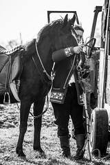 Preperaing his horse.