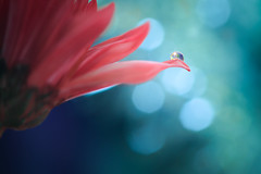 Let Your Light Shine (Elizabeth_211) Tags: blue flower macro closeup bokeh tennessee drop jacksontn westtn sherielizabeth
