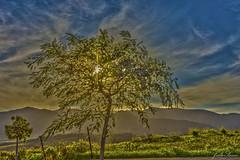Campos Verdes (juliosamo1) Tags: espaa tree verde azul hojas spain nikon plantas arboles paisaje andalucia cielo cadiz campo algeciras d7200 18140mm