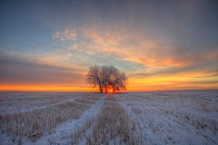 First picture of 2016 (Ryan Wunsch) Tags: winter sky snow canada tree weather clouds sunrise saskatchewan landcape