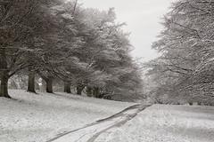 Overstone-4 (Sarah Brooke) Tags: trees winter snow northamptonshire avenue overstone harrowden