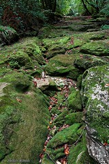 The path of the green stones - Le chemin des pierres vertes (Sbastien Vermande) Tags: autumn france forest automne river lot rivire 1001nights fort midipyrnes sigma1770 canon7d 1001nightsmagiccity