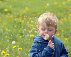 The Joys of Spring (lyndsey_pollard) Tags: flowers green grass childhood yellow youth walking outside outdoors countryside spring joy young meadow happiness hazy dandelionclock greatoutdoors simplertimes thejoysofspring