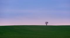 Alone (Thomas Bechtle Fotografie) Tags: blue sky tree green field landscape nikon heaven natur feld himmel wolken landschaft brandenburg baum d800
