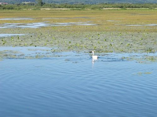 2010 07 08 Polonia - Warmia Masuria - Elblag - Il Canale - Jez Druzno - Lago Druzno - Area protetta_0916