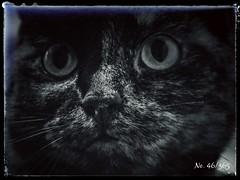 Punka (MsFerret_Art) Tags: blackandwhite bw cat eyes nikon punk sw katze 365 oneyear myproject project365 365project d5100 365bilder msferret