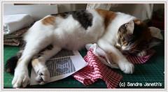 0017 - BRD - Corazones Navideños (Sandra Janeth Saa Martínez) Tags: animal navidad gatos mascotas bordado corazones hechoamano llaveros