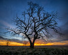 Tree at Sunset (PT Photo) Tags: colorado hdr sigma1020mm dphdr lightroom5 pse12