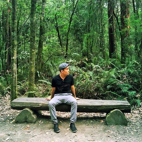 Forest & Waiting | #rperdio #travel #wanderlust #foliage #trees #solo #green #victoria #australia
