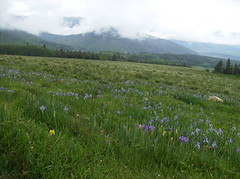 Farley Wildflower Overlook (jaygannett) Tags: colorado farley cuchara huerfanocounty
