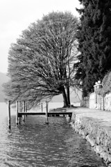A lush tree (Gi_shi) Tags: bw italy lake tree lago nikon italia bn lakeside piemonte lonely lush albero piedmont bnw biancoenero lungolago orta novara lussureggiante nikonitalia iamnikon d7200