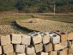 Parpaings et rizires, buffles au loin (cristoflenoir) Tags: rice  riz champ paille riziculture