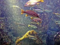 Corua_Acuario (tata_meko) Tags: corua acuario tatameko