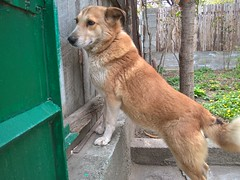WP_20160325_15_42_37_Pro (sergo tigishvili) Tags: mydog pupy