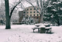 Newsom Hall CSU (Eduardo Trevisan Ribeiro) Tags: winter snow bench hall banco neve inverno newsom csu coloradostateuniversity