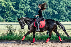 Ride the wild Wind ... (Mdarkbyte) Tags: summer horse motion rot girl germany deutschland nikon women europe sommer longhair bewegung gras grn frau bume pferd schwarz sattel 2015 gerte dressur stute d5300