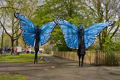 vlinder steltenlopers the s factory 2016 5 (E : info@thesfactory.eu T :06-23077206) Tags: butterfly blauw butterflies bleu papillon stilts stiltwalker vlinders vlinder stiltwalkers