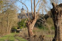 DSCF0550 (kuzdra) Tags: trees france tree spring village arbres arbre anjou   dene