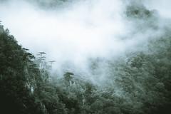 greenwood mist (Ivan Peki - www.ivanpekic.com) Tags: wood morning mist mountain nature weather misty fog forest dark landscape haze scenery moody natural smoke magic foggy greenwood spooky fantasy mysterious mountainforestweather