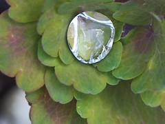 (Gsc63) Tags: plant macro water leaf foliage droplet waterdroplet