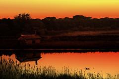 sunset (porto corsini - ravenna, italy) (bloodybee) Tags: sunset sky italy orange house reflection building tree water river landscape europe dusk channel ravenna emiliaromagna portocorsini 365project