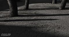"La solemnidad de un atardecer. (""CGGS Photography"" on Facebook) Tags: trees shadow blackandwhite bw espaa plants naturaleza plant tree planta byn blancoynegro nature arbol photography spain nikon plantas arboles photographer shadows floor sombra shades shade sombras fotografo suelo fotografa fotografa airelibre monocromtico d90 cggs nikond90"