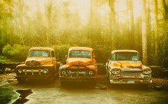 Three Old Trucks - Copy (tubblesnap) Tags: old trees usa ford chevrolet vintage for three apache sale rusty f100 american fir trucks 1956 collectors blubberhouses