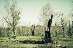 IMG_4674 (gaujourfrancoise) Tags: nt australia downunder northernterritory australie kakadunationalpark deadtrees arbresmorts gaujour