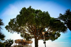 Tree & carrousel, south of France (s.razura) Tags: travel trees france backlight canon europe southoffrance carrousel 5dclassic europeonflickr