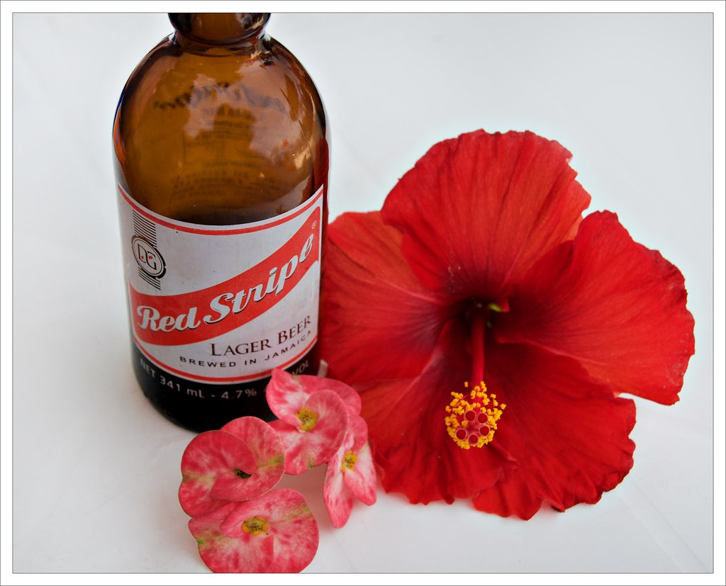 The worlds best photos of hibiscus and jamaica flickr hive mind free 2 be tags flowers red beer hibiscus jamaica redstripe afsdxvrzoomnikkor18200mmf3556gifedii boardwalkatthevillage izmirmasajfo