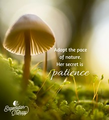 Attachment (Art Costello) Tags: inspiration plant nature mushroom beauty creativity patience positivity