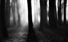 Out of the woods (mystery_live) Tags: world park wood sunset shadow sun white black nature leaves mystery forest sunrise landscapes three shine live natur poland pollen beautifull threes mysterylive