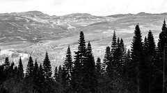 (Daveybot) Tags: wood trees bw tree forest scotland woods forestry hill hillside