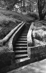 Stairs, Buena Vista Park, SF (bclook) Tags: sanfrancisco leica bw monochrome zeiss 35mm noiretblanc kodak trix d76 kodaktrix f2 schwarzweiss leicam6classic selfprocessed m6 biogon 352 filmisnotdead istillshootfilm bwfp