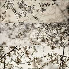 (Sophie Luciani) Tags: trees inspiration flower nature branches sophie fort luciani